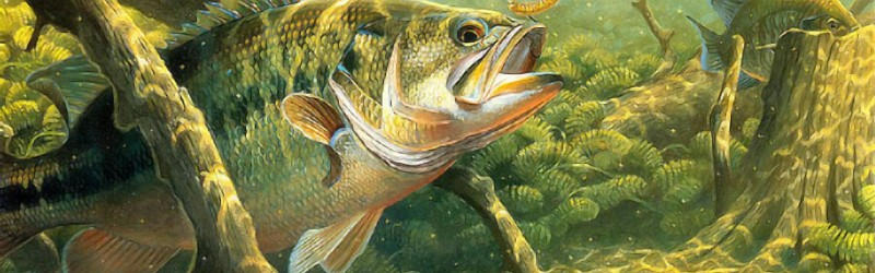 Read Producto Lure's answer to How does a trout differ from a bass? on Quora